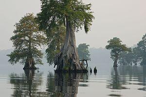 Photo of the Week Great Dismal Swamp National Wildlife Refuge VA 4578425529 3