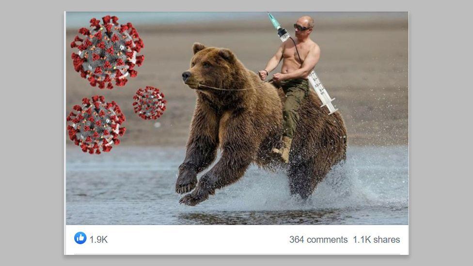113939902 bear grey