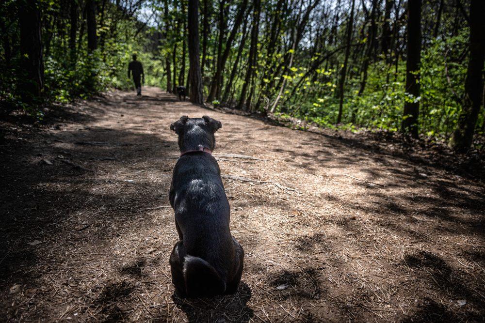 Udvarhelyi Tessza es Sara kutya foto@CsoszoGabriella 8039 scaled