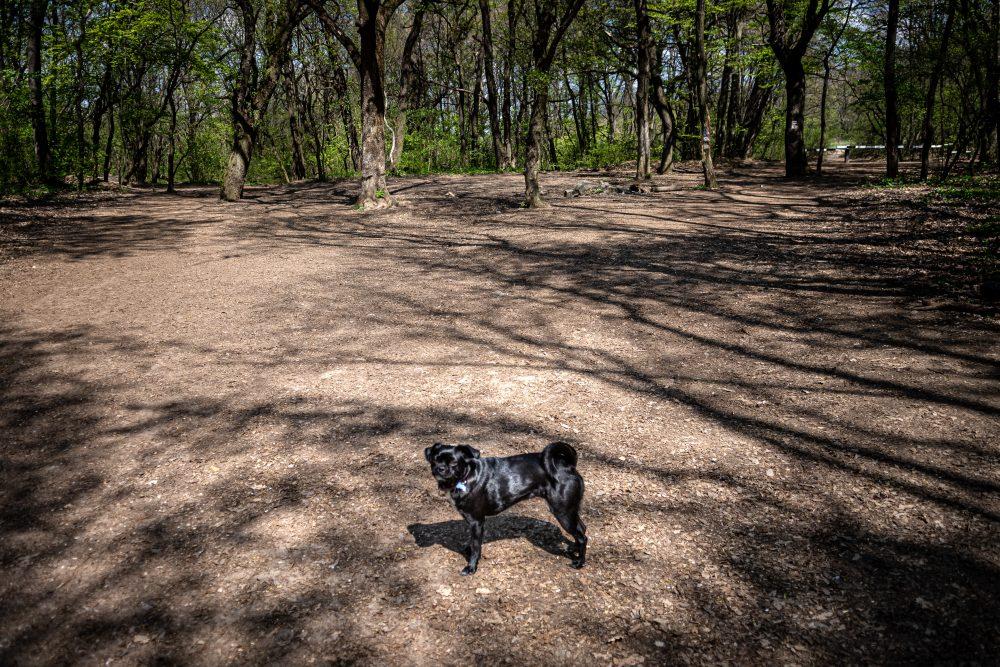 Udvarhelyi Tessza es Sara kutya foto@CsoszoGabriella 8082 scaled