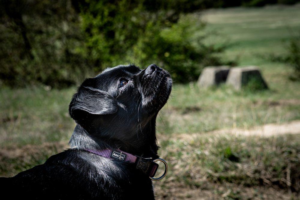 Udvarhelyi Tessza es Sara kutya foto@CsoszoGabriella 8107 scaled