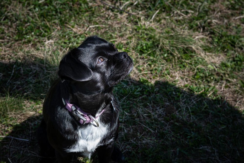 Udvarhelyi Tessza es Sara kutya foto@CsoszoGabriella 8137 scaled